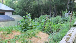 biodynamics vegetable garden