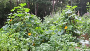 biodynamics vegetable July